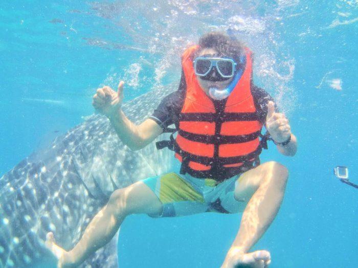 プレミア:オスロブ、ジンベイザメ