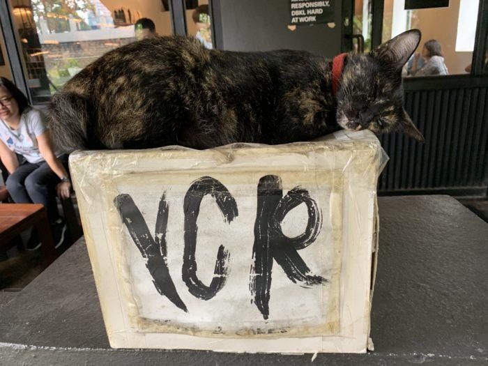 VCR 入り口の猫