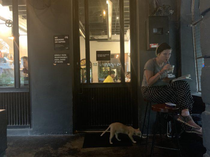 カフェ 猫 伸び